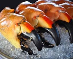 Key-West-Lobster-Stone-Crab-Key-West-Stone-Crab